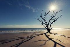 Botany Bay beach Stock Photography