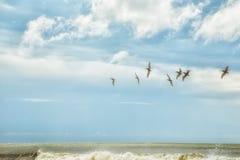 Botany Bay Beach Royalty Free Stock Photography