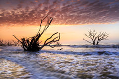 Botany Bay Ocean Edisto Island Charleston South Carolina Royalty Free Stock Images