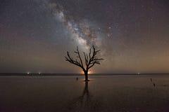 Botany Bay Plantation Beach at night. A bare tree in the ocean at low tide at Botany Bay Planation Beach, South Carolina Stock Image