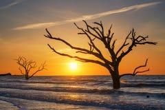 Botany Bay Plantation Beach at sunrise. Silhouette of a tree in the ocean in Botany Bay Plantation South Carolina Stock Photos