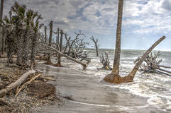 Botany Bay Plantation Boneyard Beach SC Royalty Free Stock Photos