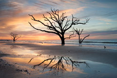 Charleston, SC Botany Bay Edisto Tree in Surf Reflections Stock Photography