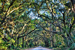 Botany Bay Plantation Spooky Dirt Road Marsh Oak Trees Tunnel wi Stock Photo