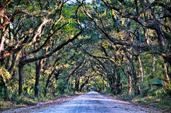 Botany Bay Plantation Spooky Dirt Road Marsh Oak Trees Tunnel wi Stock Images