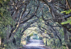 Botany Bay Plantation Spooky Dirt Road Marsh Oak Trees Tunnel wi Stock Photo