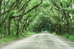 Botany Bay Road Live Oak Tunnel South Carolina Royalty Free Stock Photo