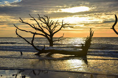 Botany Bay Sunrise. Botany bay oak trees in Edisto Island, South Carolina, just outside of Charleston Stock Photos