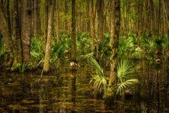 Botany Bay swamp land Stock Photo
