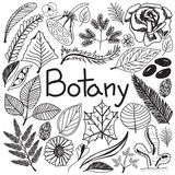 Botany biology doodle handwriting icons plants and trees Royalty Free Stock Photo