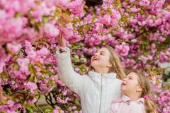 Botany concept. Flowers soft pink clouds. Children enjoy warm spring. Girls posing near sakura. Lost in blossom. Kids on. Pink flowers of sakura tree background stock images