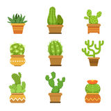 Botany decorative plants in pots. Cactus with flowers isolate on white background. Vector illustrations. Botany decorative plants in pots. Cactus with flowers stock illustration