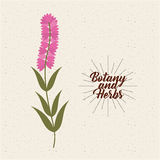 Botany and herbs design Stock Image