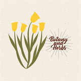 Botany and herbs design Royalty Free Stock Photos