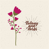 Botany and herbs design Royalty Free Stock Image