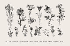 botany jogo Flores do vintage Fotografia de Stock Royalty Free