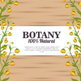 Botany 100 percent natural. Vector illustration design royalty free illustration
