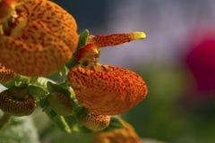 Botany Royalty Free Stock Photography