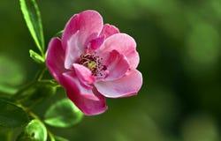 Botany Stock Image