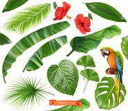 Free Botany. Set Of Leaves And Flowers. Tropical Plants. 3d Realistic Vector Icons Stock Images - 141542524