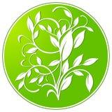 Botany sign. Green plant signet royalty free illustration
