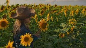 The botany teacher describes sunflowers on the field stock video footage