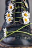 Botas com Daisy Flowers imagem de stock royalty free
