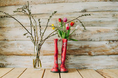 Botas de chuva coloridas com flores da mola e ramos do salgueiro em w Fotografia de Stock Royalty Free