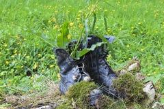 Botas velhas na grama Fotos de Stock