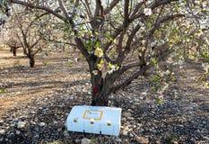 Boîte avec des abeilles de la station biologique dans le jardin d'amande Photographie stock