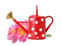 Boîte d'arrosage rouge et fleurs roses de pivoine d'isolement sur le blanc Image stock