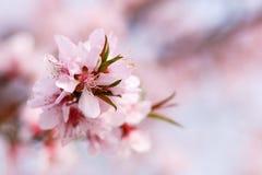 Bote des Frühlinges Stockbilder