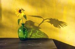 Botella con el girasol y la luz del sol de la tarde Foto de archivo libre de regalías