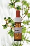 Botella con el remedio de la acción de la flor de Bach, alerce (Larix) fotografía de archivo libre de regalías