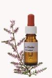 Botella con el remedio de la acción de la flor de Bach, brezo (Calluna vulgaris) fotos de archivo libres de regalías