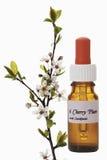 Botella con el remedio de la acción de la flor de Bach, Cherry Plum (cerasifera del Prunus) imagenes de archivo