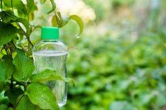 Botella cosm?tica del aceite en fondo verde de la naturaleza con el espacio de la copia concepto del cuidado de piel del cuerpo L imágenes de archivo libres de regalías
