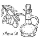 Botella de aceite de nuez del Argan, baya, hoja, rama, planta Ejemplo grabado dibujado mano del grabado de pistas del bosquejo de Imágenes de archivo libres de regalías