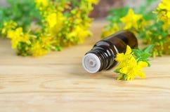 Botella de aceite esencial de la hierba de San Juan (extracto, tinte, infusión) foto de archivo