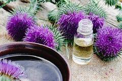 Botella de aceite esencial del cardo con las flores del cardo en fondo de madera fotos de archivo libres de regalías