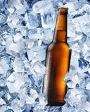 Botella de cerveza en cubos de hielo Foto de archivo libre de regalías