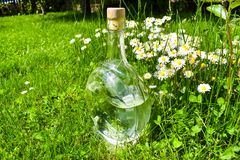 Botella de cristal transparente de agua en la hierba verde con las margaritas y los dientes de le?n en un d?a soleado fotografía de archivo libre de regalías