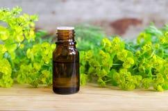 Botella de cyparissias del euforbio, extracto del spurge del ciprés (tinte del Milkweed, infusión, aceite herbarios) Fotos de archivo libres de regalías