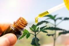 Botella de la tenencia de la mano de aceite del cáñamo contra la planta de marijuana, pipeta del aceite de CBD imagenes de archivo