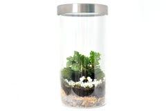 Botella de las plantas Imagen de archivo libre de regalías