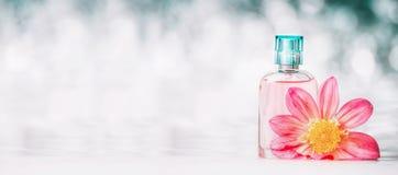 Botella de perfume con la flor rosada en el fondo del bokeh, vista delantera, bandera Belleza y perfumería Imágenes de archivo libres de regalías
