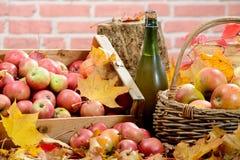 Botella de sidra de Normandía, con muchas manzanas Fotografía de archivo libre de regalías