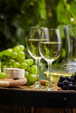 Botella de vino blanco con la copa y las uvas en viñedo Fotografía de archivo libre de regalías