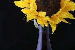 Botella de vino con el girasol Imagen de archivo libre de regalías