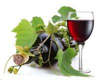 Botella de vino en la vid Fotografía de archivo libre de regalías